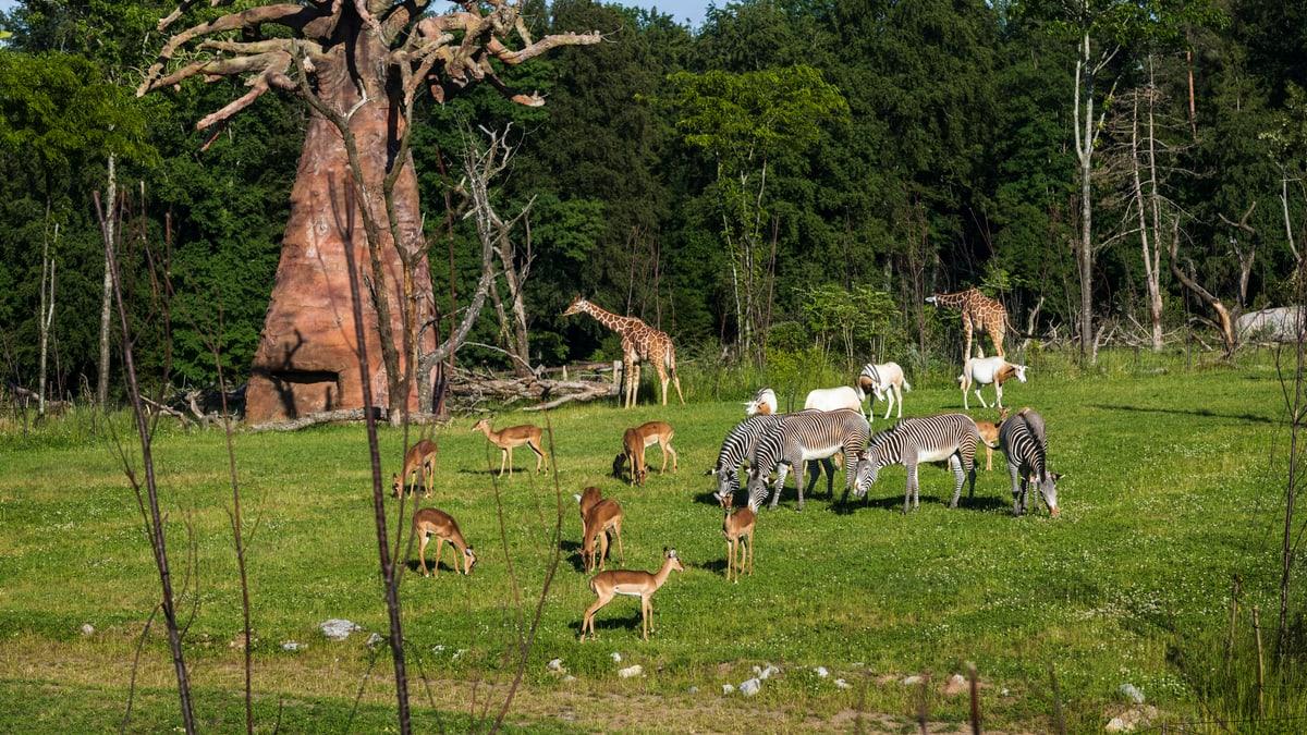 Zoo Online Schauen